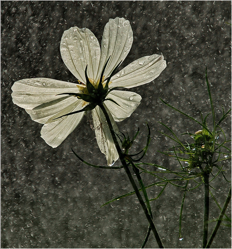 'Cosmos in storm' by Roger Kent