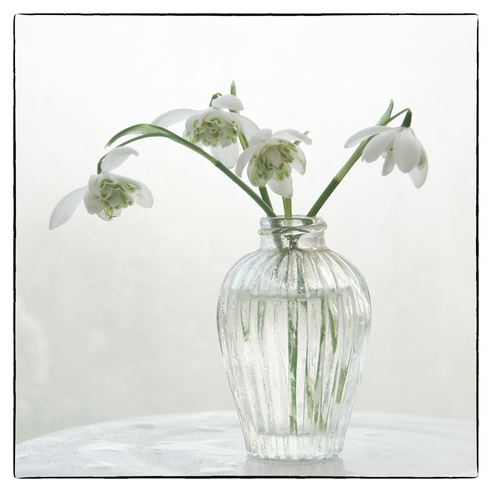 First 'Snowdrop' by Sally Money