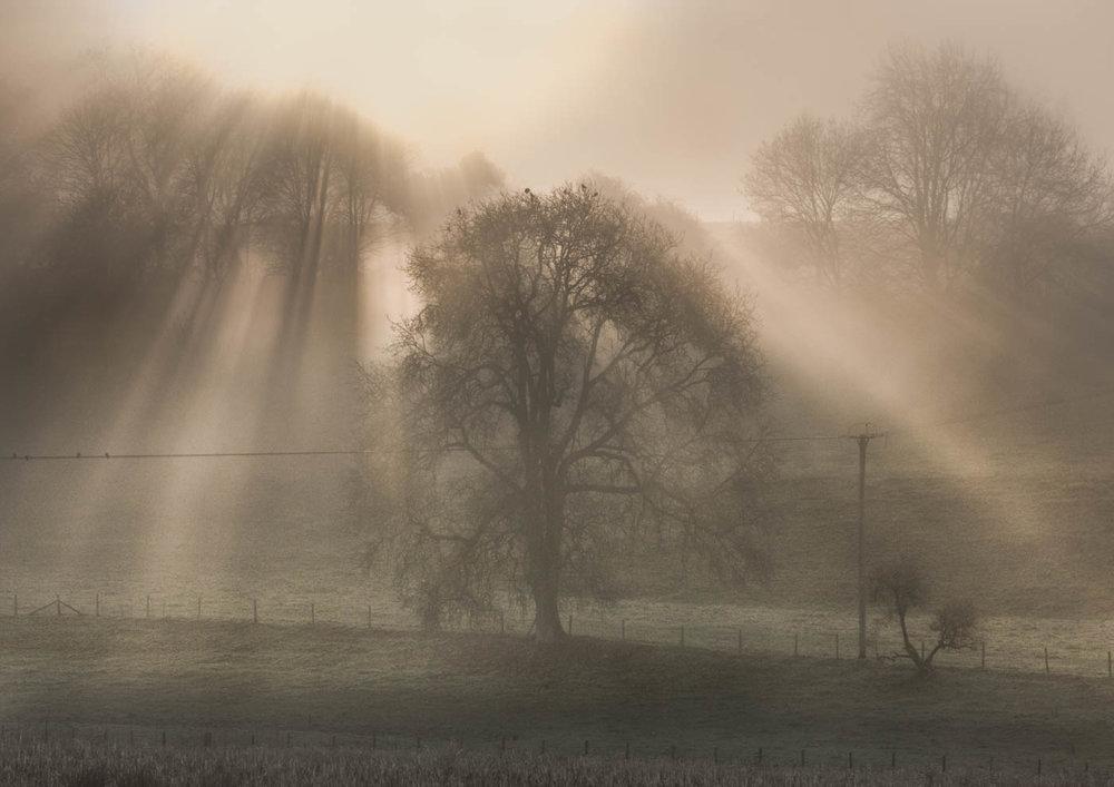 Third 'Winterborne Valley roosts' by Jane Osborne