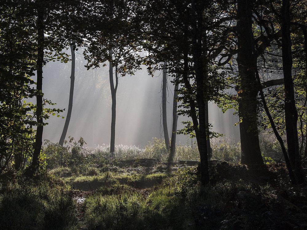 10_Odstock Woods_Tony Oliver
