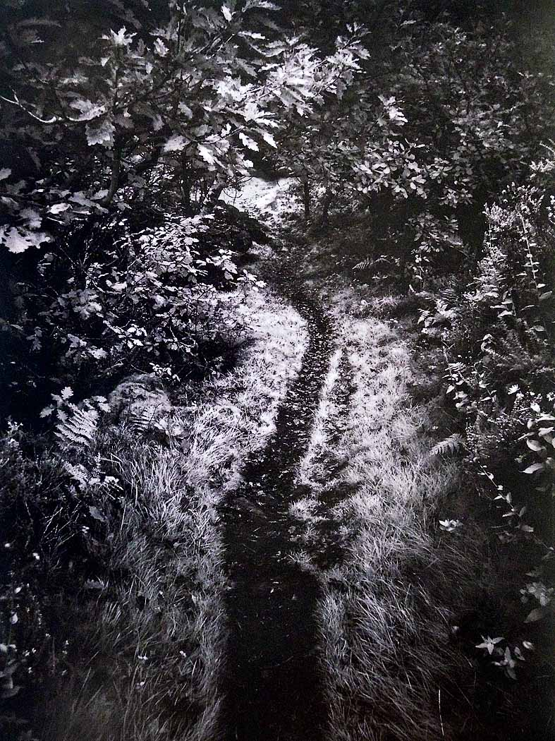 77_Dark Footpath_Peter Read