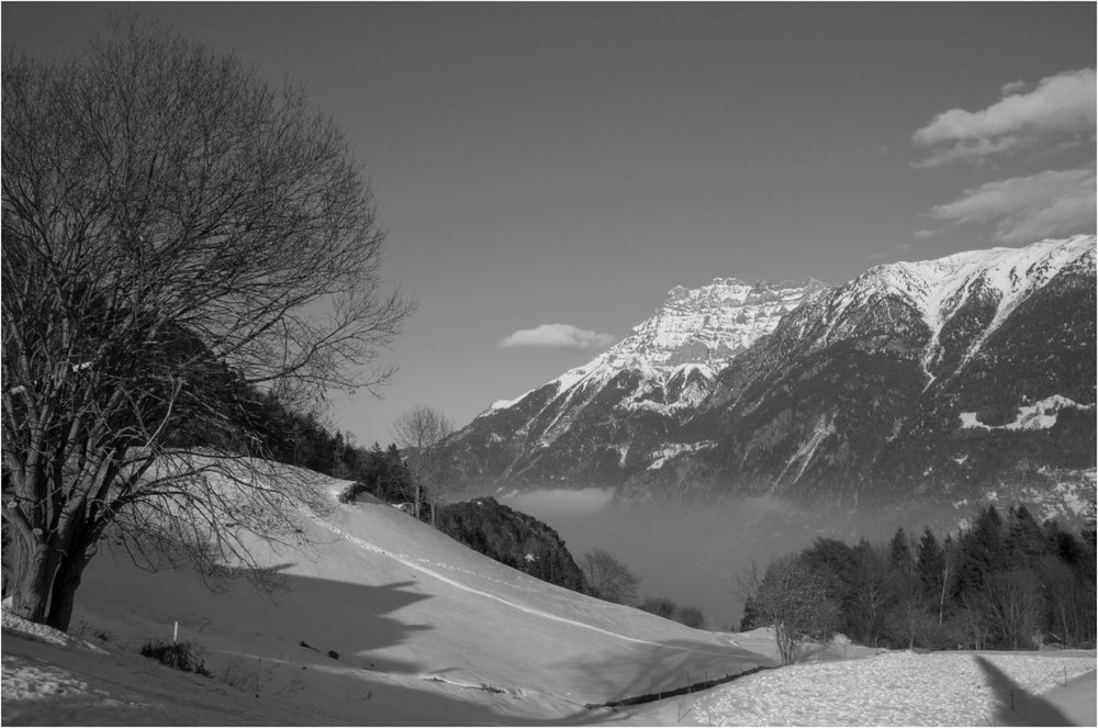 83_Winter-Meadows_Robin Gemmill