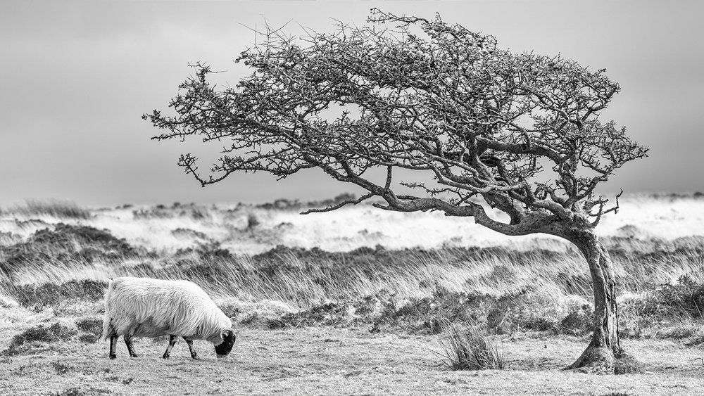 'Windswept' by Mark Cooper