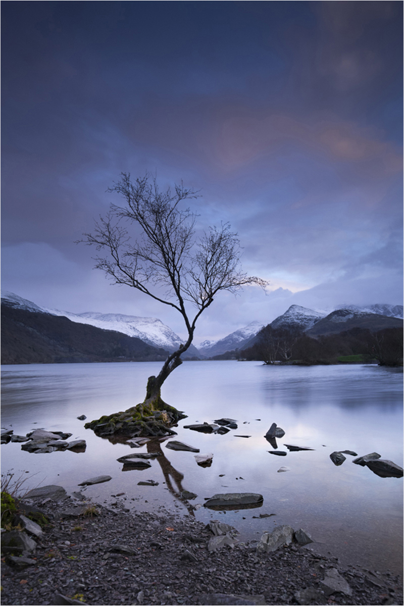 'Lone Tree at Llanberis' by John Barton