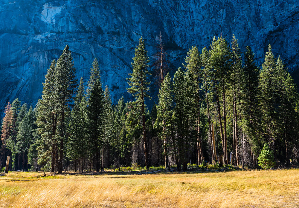 Third 'Yosemite Meadow Tree' by Mike Brows