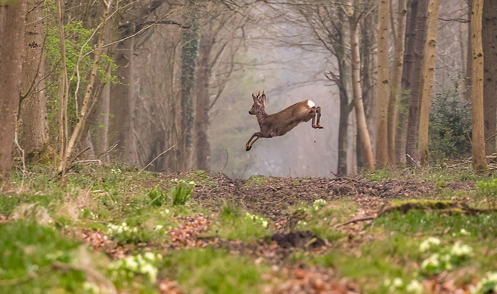 'Leaping Deer' by Martin Cook
