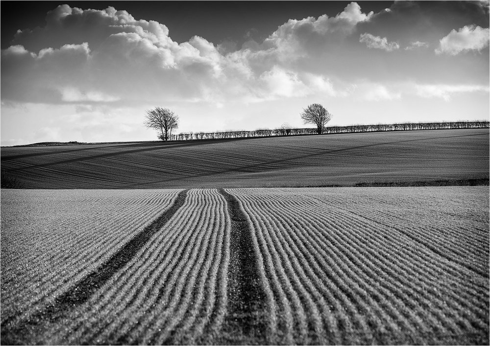First 'Fieldscape' by Tony Oliver