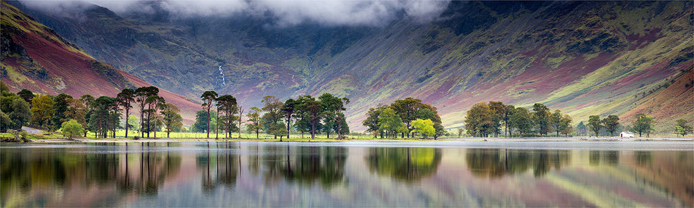 First 'Buttermere Pines' by John Barton