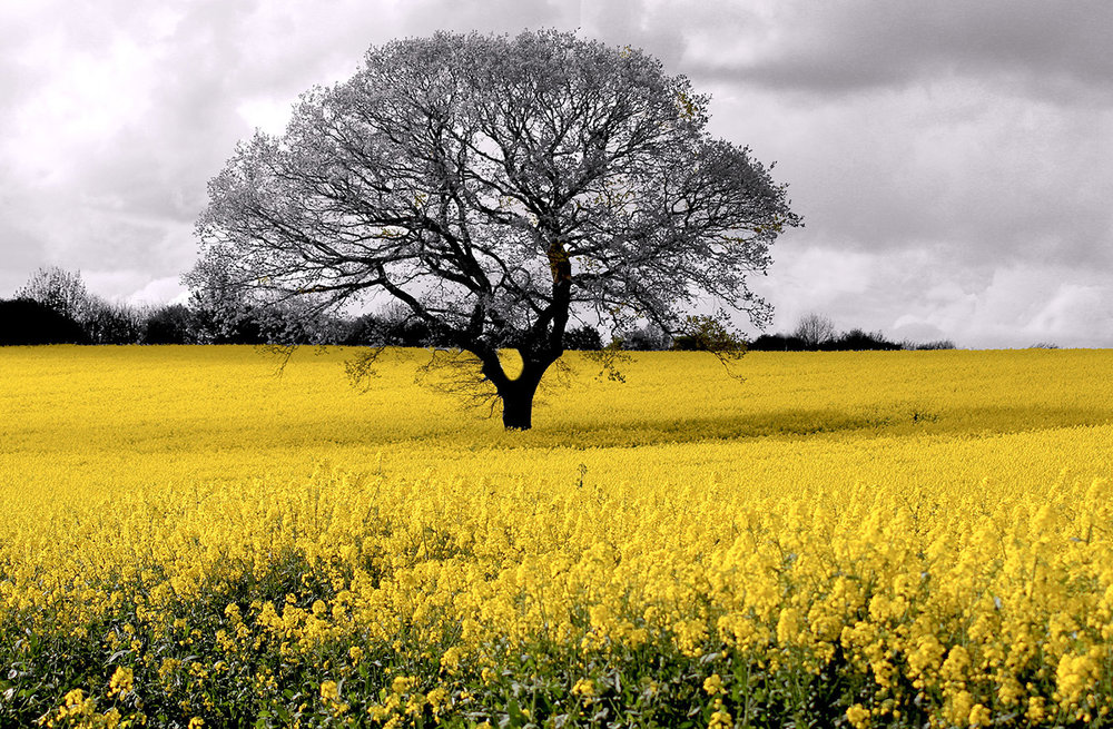 'Rape Field' by Beth Jacobs