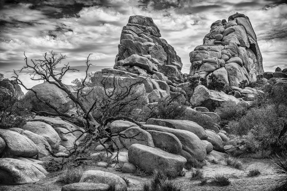 'In Joshua Tree National Park' by Mike Brown