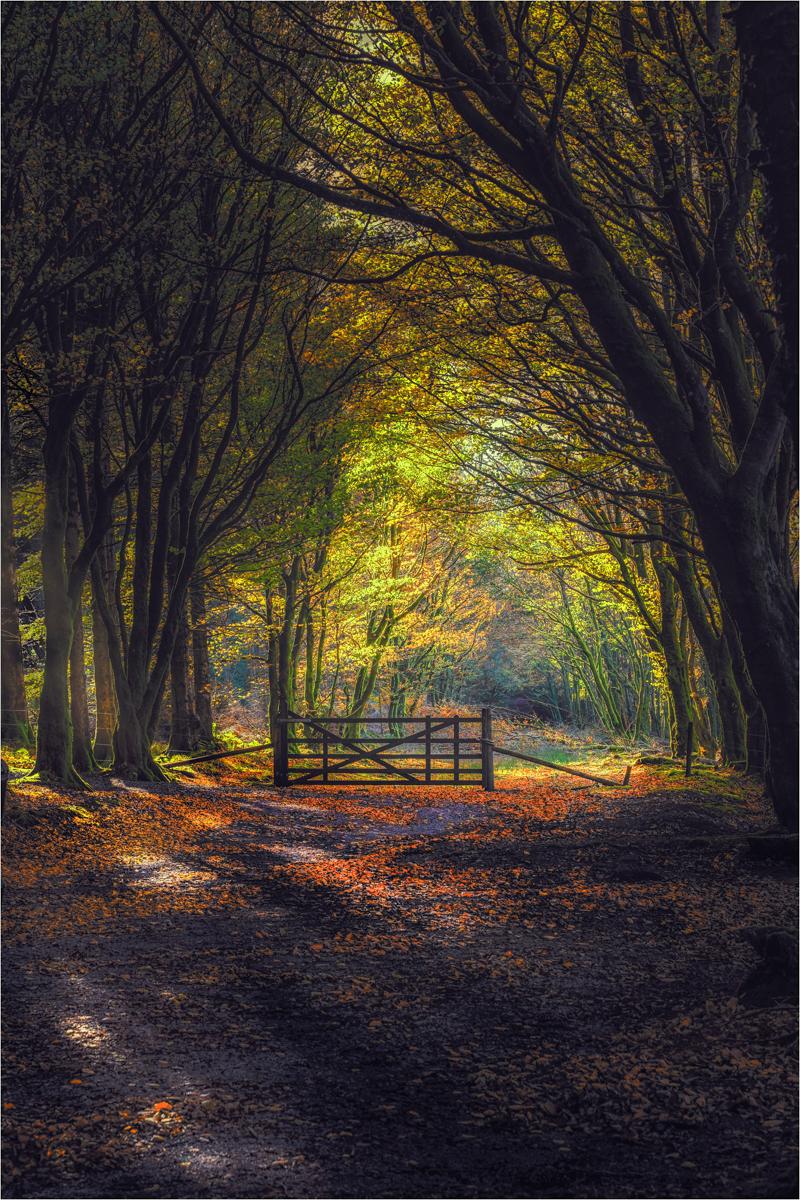 02_Bellever Gold Dartmoor_John Barton