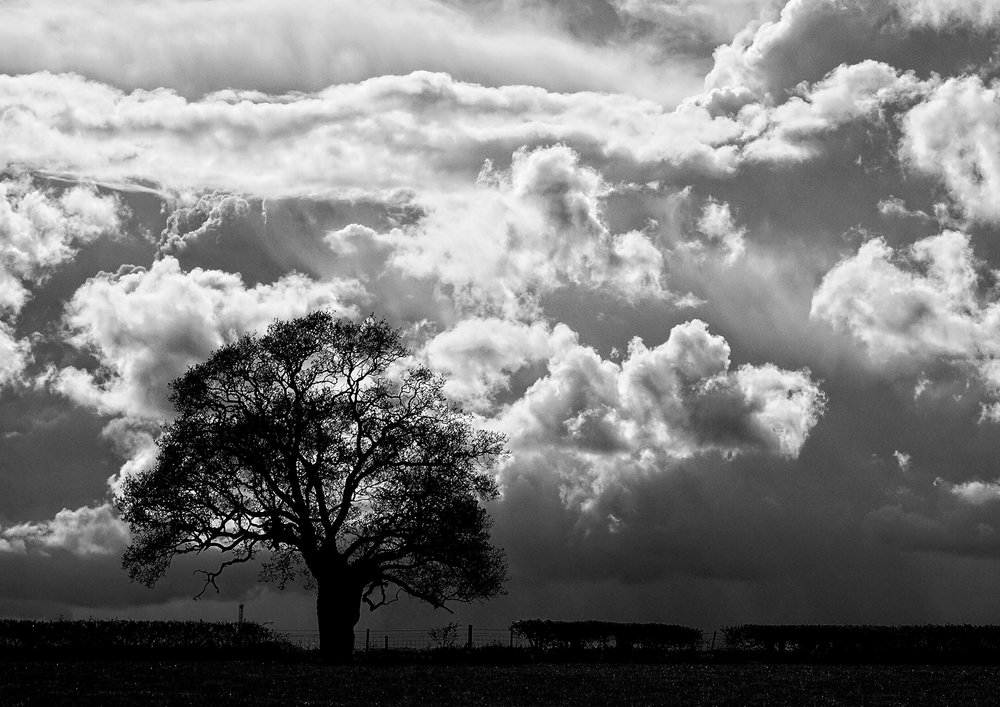 49_Storm Brewing_John Hart