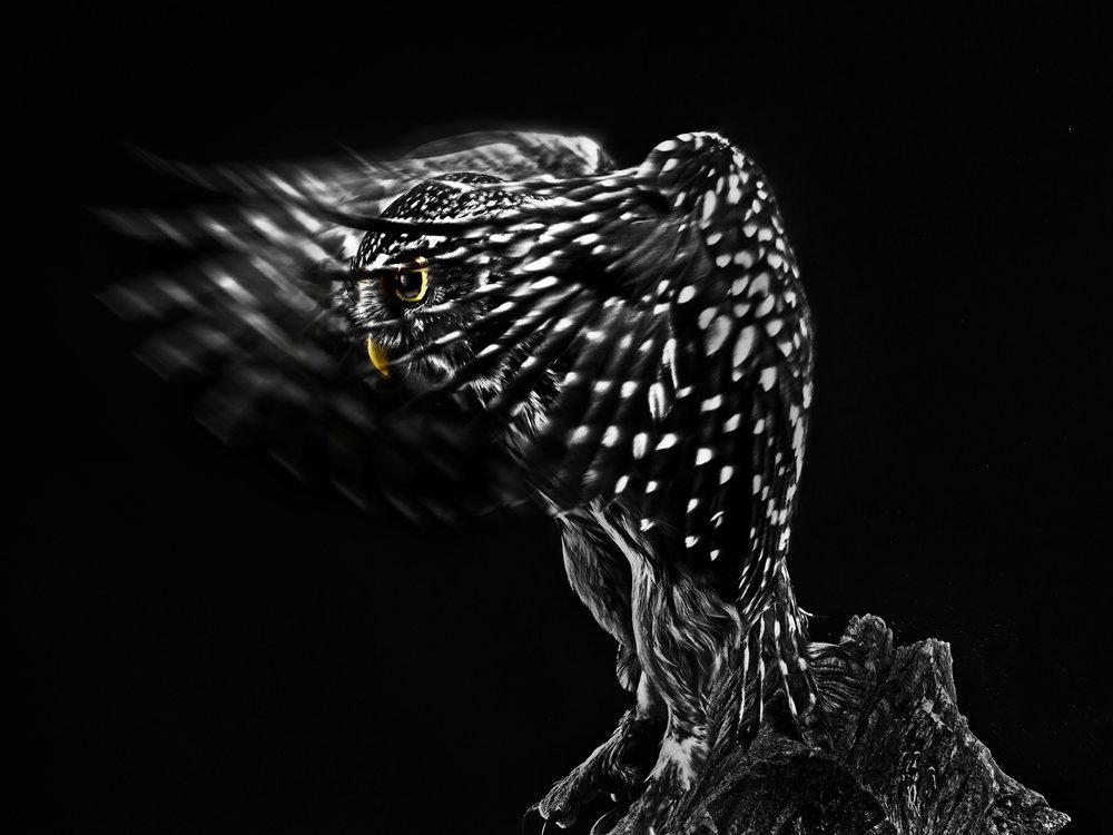 Second 'Evil Eye' by Ian Porter