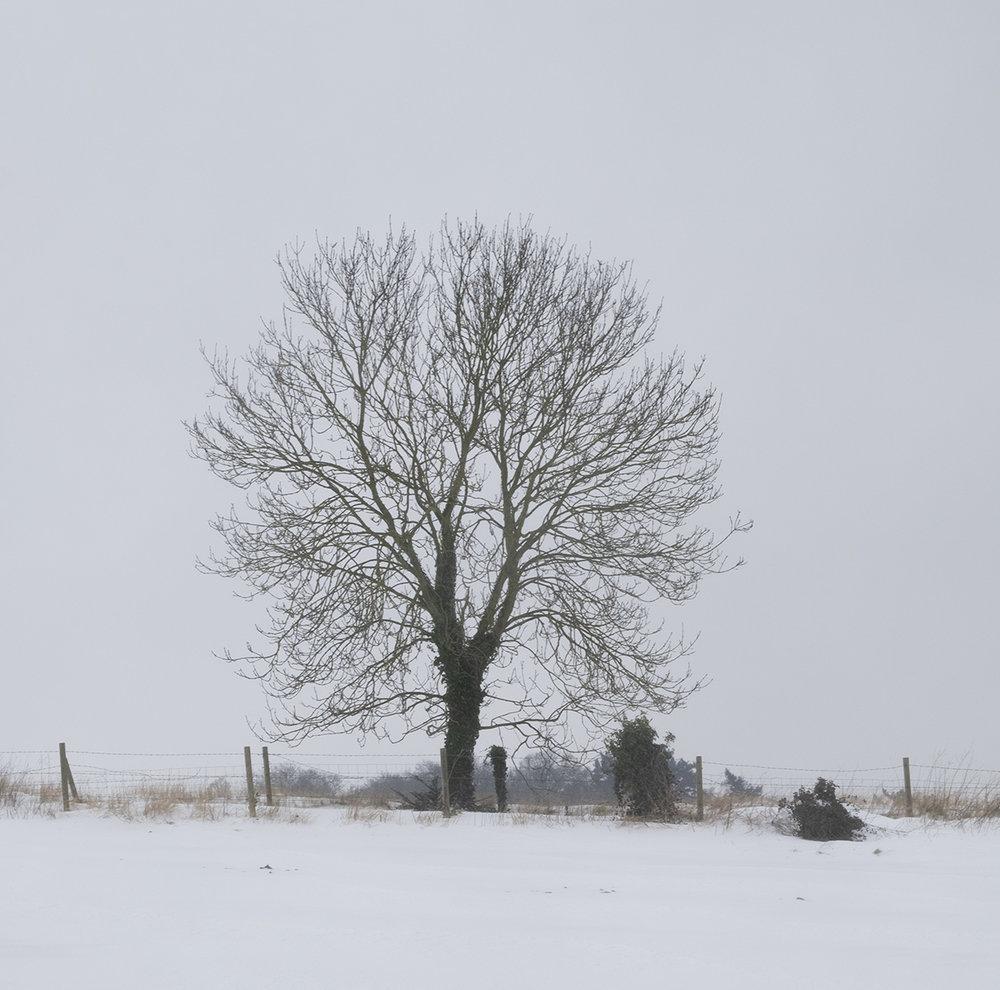 HC 'Tree' by David Miesner