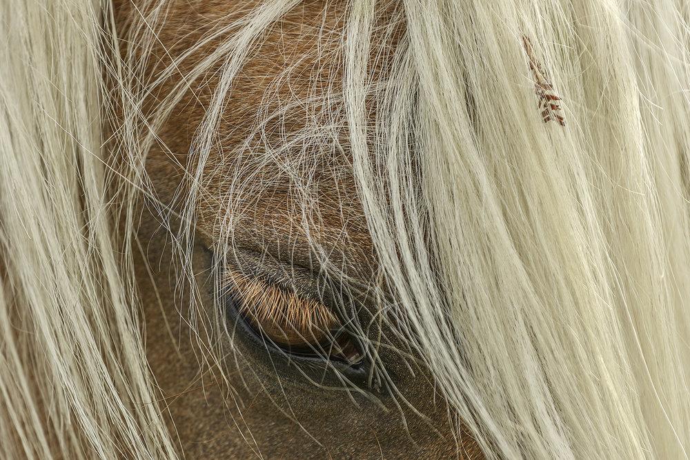 Third 'Horse 02' by Tony O'Reilly'