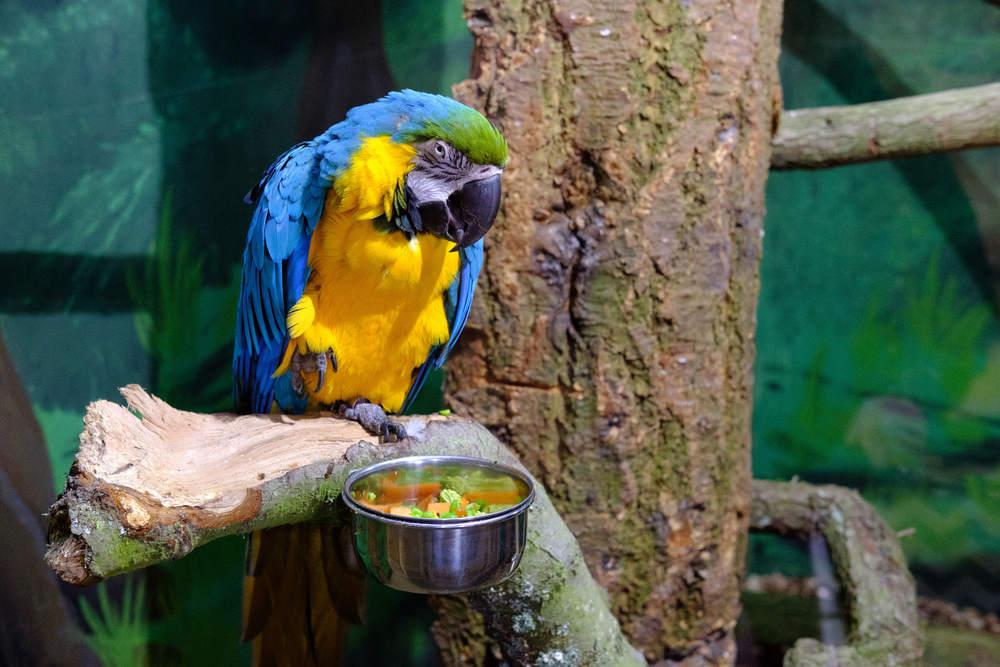 Macaw at Eshottheugh Animal Park, Northumberland