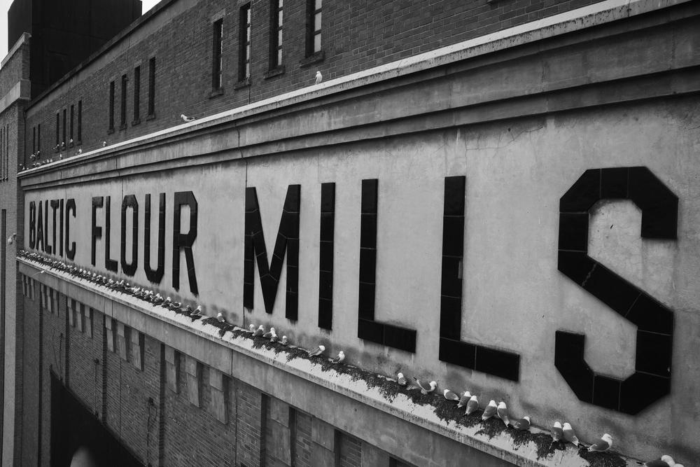 BALTIC Flour Mills sign - plus Kittiwakes!