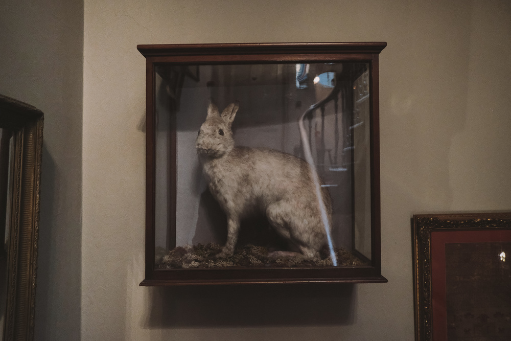 La Rosa Hotel Whitby // Rabbit in a Box // By Wedding Photographer Barry Forshaw