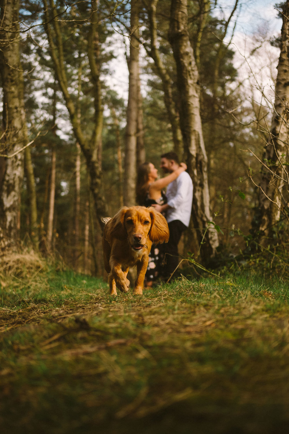 Couple kiss in Chopwell Woods as their dog runs towards the camera