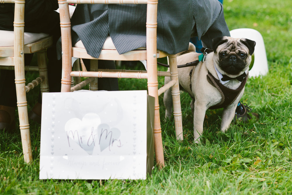 Pug peers out from behind chair during outdoor wedding ceremony