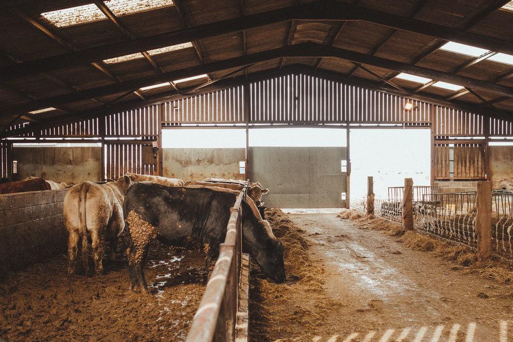 Barn on the Bay Northumberland wedding venue-0004.jpg