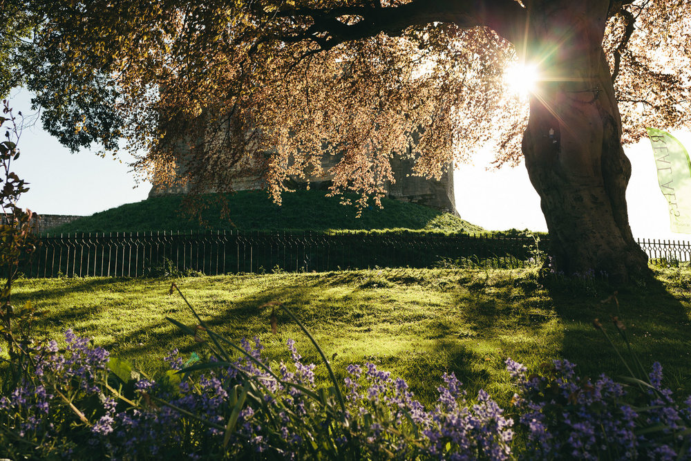 Sun shines through tree canopy with Warkworth castle in the background and purple flowers in the foreground
