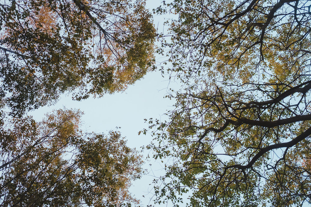 Looking up at the treetops at Havannah Nature reserve in Newcastle