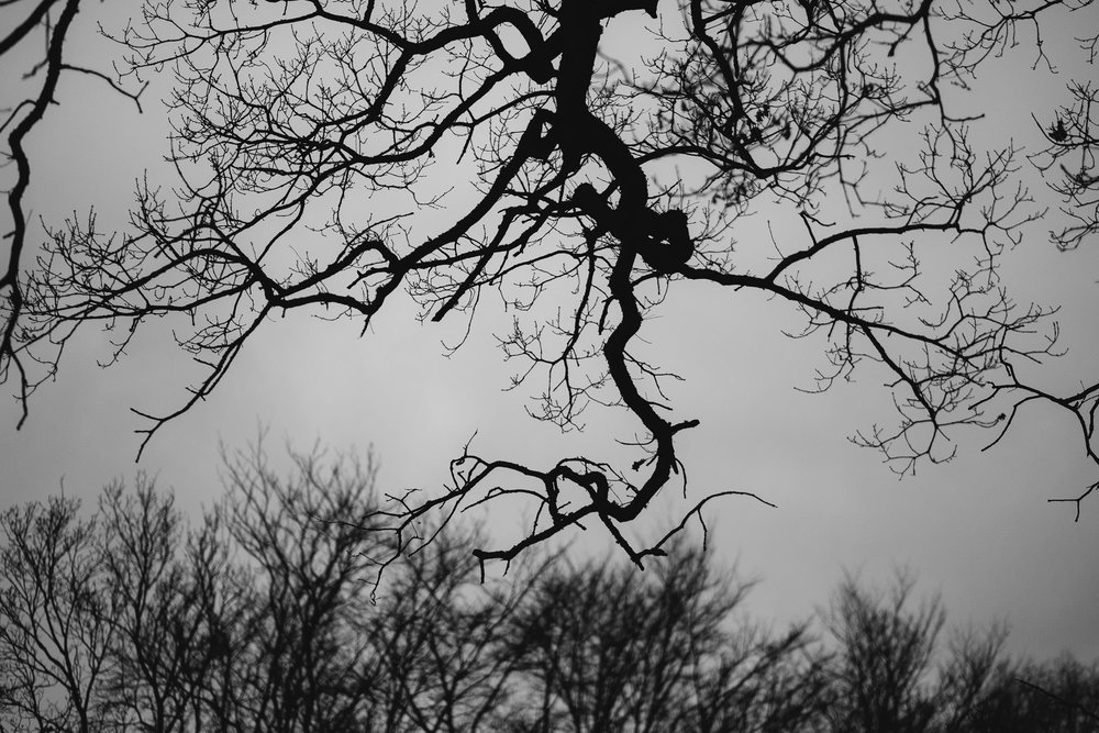 Black and white photo of the bare tree branches against the sky