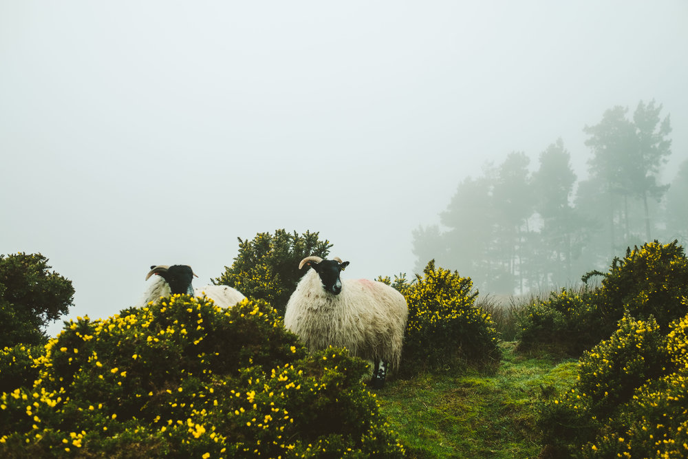 Scouting Simonside Hills by Barry forshaw-0002.jpg