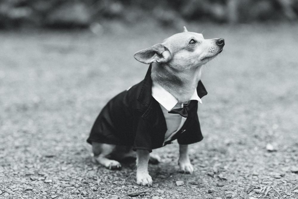 Barney; The Suavest Dog