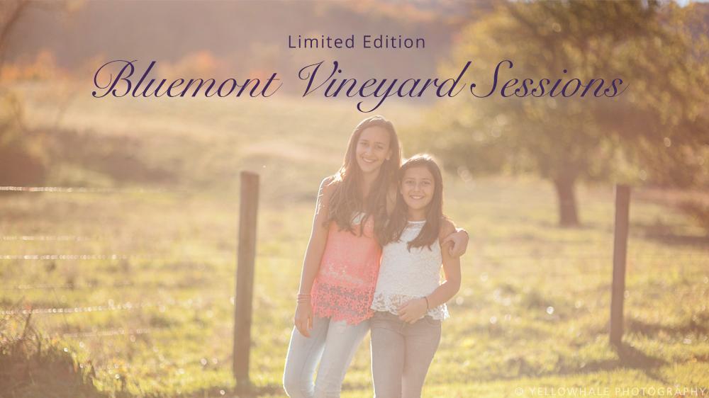 vineyard-2.jpg