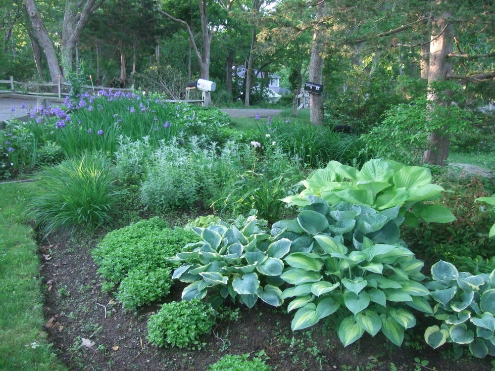 Mature shade garden. Scituate, MA