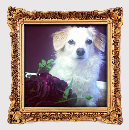 Monty_flowerspurple.jpg