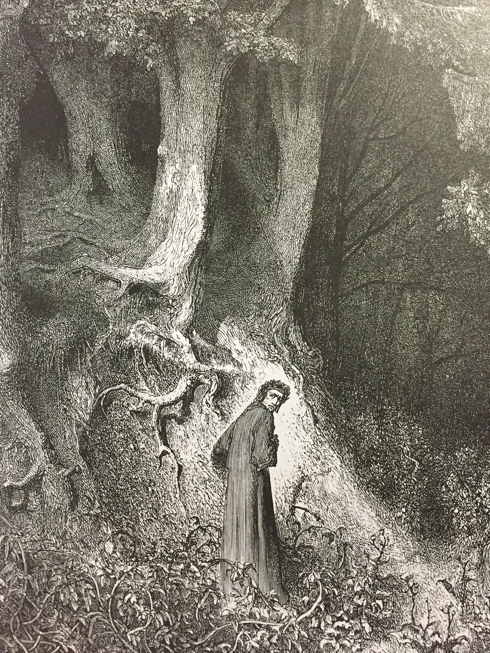 The Forest (Gustave Doré) from  The Divine Comedy