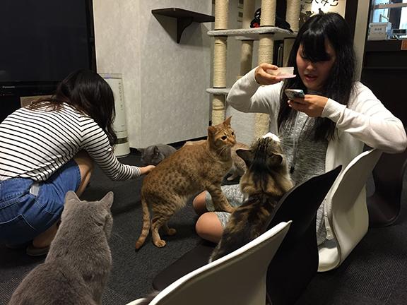Calico Cat Café in Tokyo (©Deborah Clague)