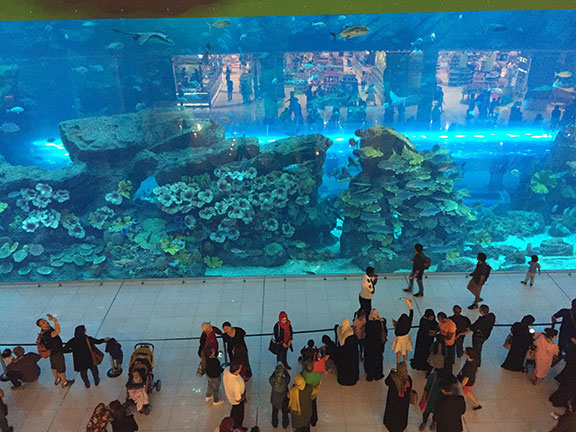 The aquarium at Dubai Mall (©Deborah Clague, 2016).