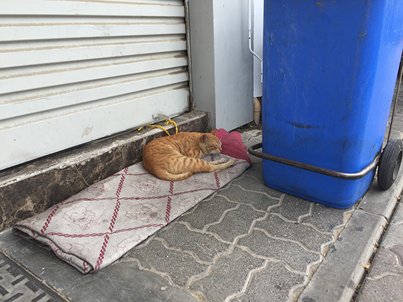 Stray cat in Deira (©Deborah Clague, 2016)