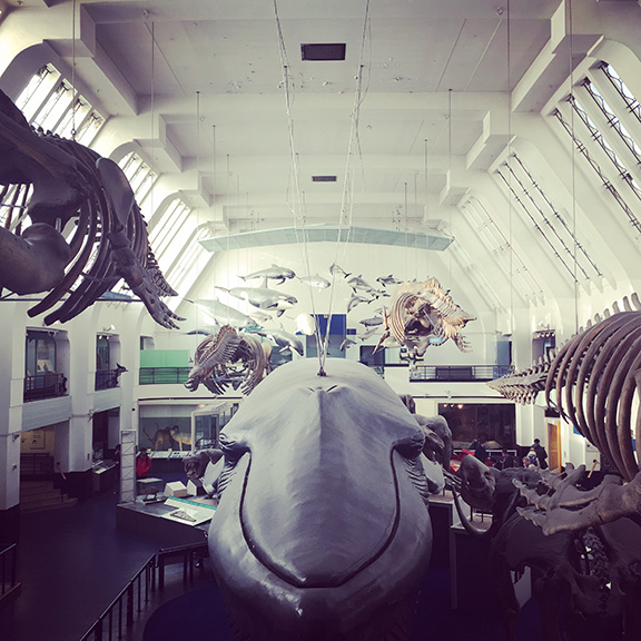 Natural History Museum (©Deborah Clague)