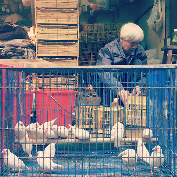 Birds for sale at Yuen Po Bird Garden, Hong Kong (©Deborah Clague, 2018).