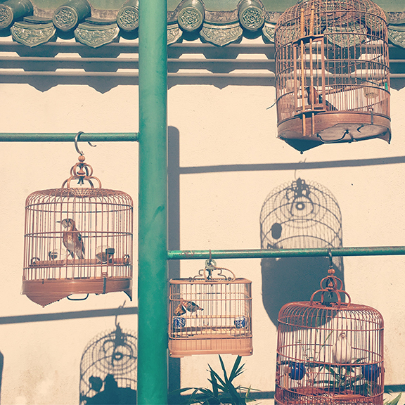 Yuen Po Bird Garden, Hong Kong (©Deborah Clague, 2018).
