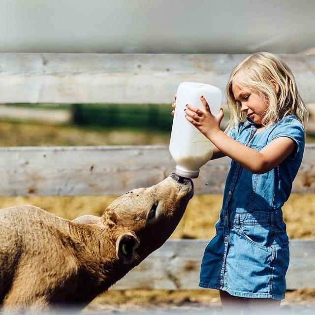 Living way out in the back country isn't always easy, but sometimes it is just magic. . #farmkids #farmlife  #whitecourtphotographer #barrheadphotographer #livethelittlethings #abeautifulmess #whitecourt #familyphotojournalism #documentaryfamilyphotography #candidchildhood #storyteller #wildandfreechildren #everydayadventures #letthembelittle #yegfamily #yegmoms #yegkids #familylegacy #kidsforreal #kidsinthewild #yegphotographer #yegphotography #letthekids #familydocumentary #ourbeautifulordinary #familyhistory #yegfamilyphotographer #awesomeyegkids #nevergrowup #reallife