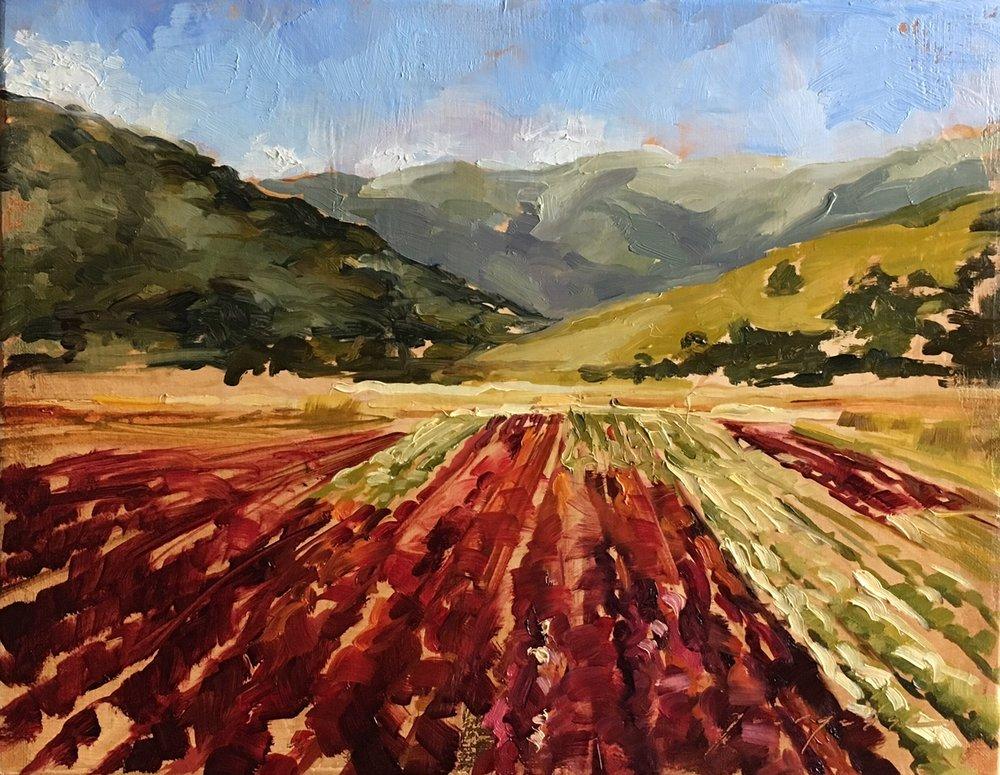 "Bountiful, San Benito County lettuce fields, Oil on Linen, 11""x14""  SOLD"