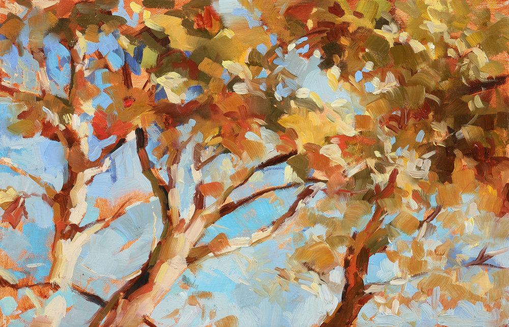 "Autumn Sycamore, 6.5""x11"", oil on panel"