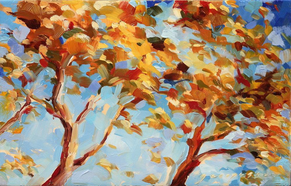 Autumn Sycamore resized.jpeg