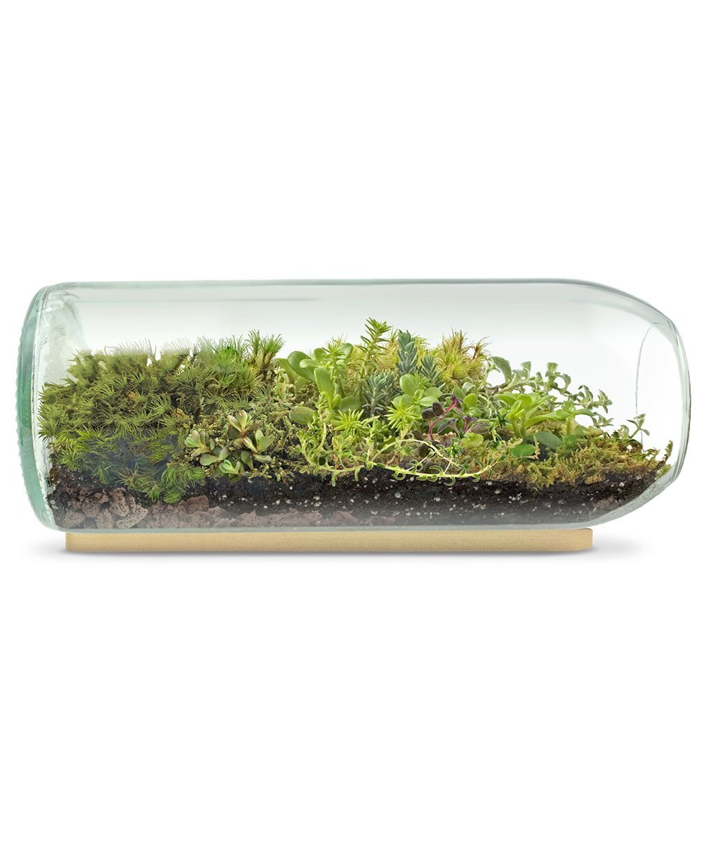 Large Terrarium - Made from upcycled wine bottles,