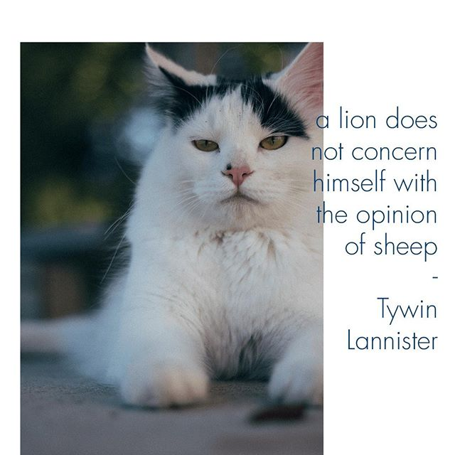 A lion does not concern himself with the opinion of sheep . . . . . #quote #lion #tywinlannister #cat