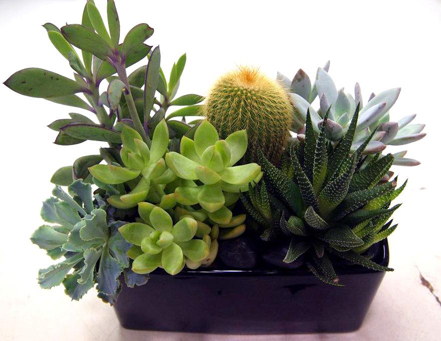 Plantscaping_4_final.jpg