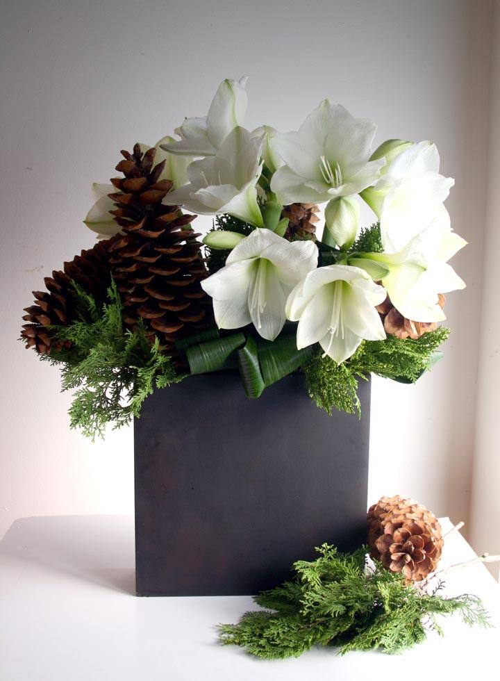 white amaryllis_pinecone.jpg
