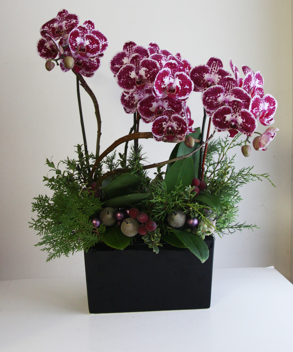 Holiday Orchid 3.jpg