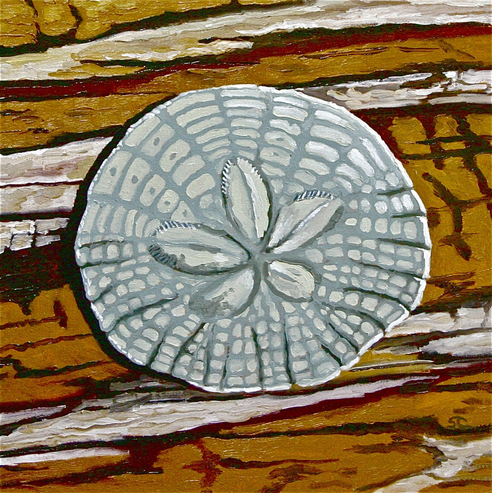 """Sand Dollar"" oil on panel 12 x 12 sold"